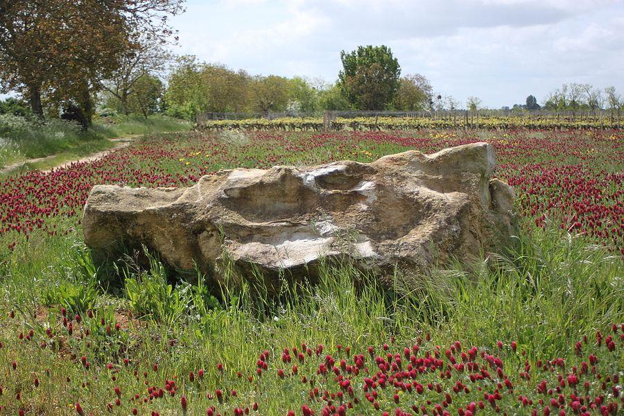Menhir-polissoir, Grouas, Fr-49-Martigné-Briand.