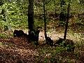 Wald Altenburg Kaltern 2.jpg