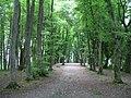 Waldkathedrale Beromünster.jpg