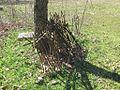Ward Memorial Cemetery Lucy TN 010.jpg