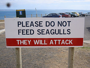 Warning Sign Phillip Island Victoria
