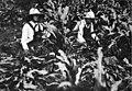 Wartime Vacation girls Mt Kisco Touchstone 1917 v1 p468-1.jpg