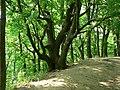 Weston Bend State Park (22062910).jpg