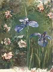 Wild Roses and Irises