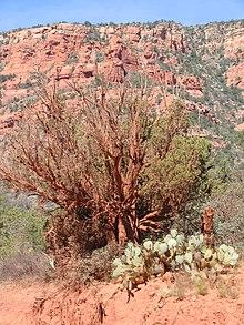 Wild wild cacti 03.jpg