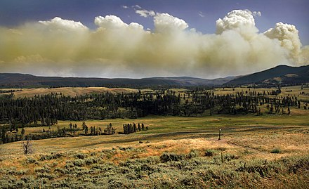 Wildfire in Yellowstone National Park produces a pyrocumulus cloud. Wildfire in Yellowstone National Park produces Pyrocumulus clouds1.jpg
