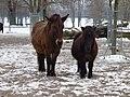 Wilhelma Ponys.jpg