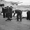 Winston Churchill stops 'Blackie', ship's cat of HMS PRINCE OF WALES, crossing over to a US destroyer during the Atlantic Conference, August 1941. H12756.jpg