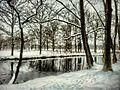 Winter Wonderland - panoramio (1).jpg