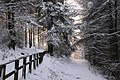 Winter path (3258772986).jpg