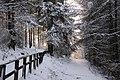 Winter path (3258772986).jpg