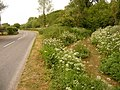 Winterbourne Steepleton, the South Winterborne and the B3159 - geograph.org.uk - 1354245.jpg