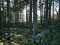 Wood at Snaisgill - geograph.org.uk - 685978.jpg