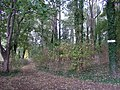 Woodland Path, Stretton - geograph.org.uk - 1527278.jpg