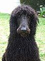 Wooly Bear (417000851).jpg