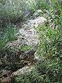 Yagur – Nesher, the Green Path – Mount Carmel 104.JPG
