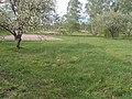 Young garden - panoramio.jpg
