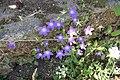 Zakynthos flora (Vol) (35852719906).jpg