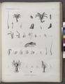 Zoologie. Crustacés. Hermites, Écrévisses (NYPL b14212718-1268558).tiff