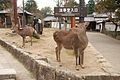 Zoshicho, Nara, Nara Prefecture 630-8211, Japan - panoramio - jetsun (30).jpg