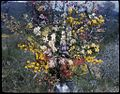 (Bouquet of native flowers, 2) (Frank Hurley) (9714546974).jpg