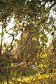® S.D. MADRID PARQUE DEL OESTE PARQUE DE LA TINAJA - panoramio (1).jpg
