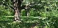 Андріївський ліс 01.jpg