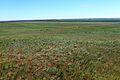 Вид с высоты 262 - panoramio.jpg