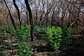 Горелый лес с северной стороны - panoramio.jpg