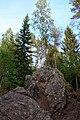 Деревья на скалах в в лучах заката.jpg