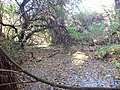 Заболочена балка, де знаходиться витік р. Інгулець.jpg