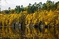 Золотая осень, Дениши - panoramio (4).jpg