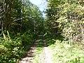 Квадрациклетная дорожка-Road for ATVs, середина сентября 2012 - panoramio.jpg