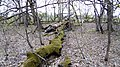 Ландшатний заказник на лівому березі озера Конча (39).jpg