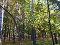 """Листопад (парк """"Швейцария"""").jpg"""