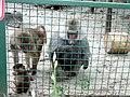 Мавпи в екопарку.jpg