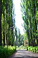 Наводницкий парк в Киеве. Фото 7.jpg