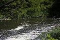 Нижня течія річки Євсуг 02.jpg
