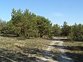 Оліготрофна рослинність у заказнику Полігон.jpg