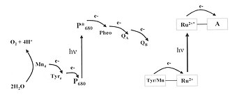 Artificial photosynthesis - Natural (left) versus artificial photosynthesis (right)
