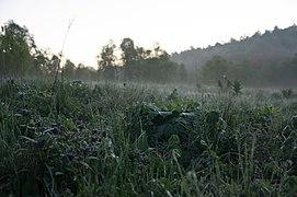 Рассвет в долине реки Ходзь, туман над травой, горы Западного Кавказа.jpg