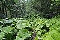 Тропа - panoramio (11).jpg