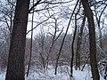 Чернечий Ліс 17.jpg