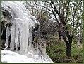 سرمای زود رس - panoramio.jpg