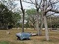 卑南文化公園 Beinan Cultural Park - panoramio.jpg