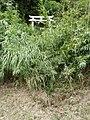 大塚山登り口の鳥居 2011-09-25 - panoramio.jpg