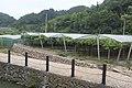 石雅村 - panoramio (3).jpg
