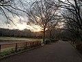都立大泉中央公園の冬 - panoramio.jpg