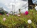 0305jfOrtigas Avenue Santolan Road Streets Landmarks San Juan Quezon Cityfvf 10.jpg