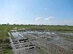 03306jfBirds Sanctuary Ducks Wetland Marshes Rice Fields Candaba Pampangafvf 12.JPG